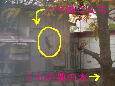 ノラ姉さんの家