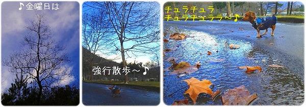 金3-horz