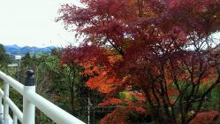 持宝院の秋