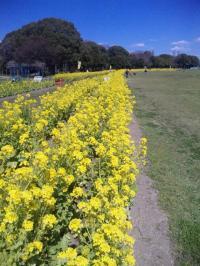 黄色の小道♪