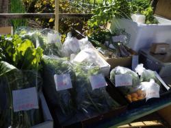 キレイに育てられた野菜たち