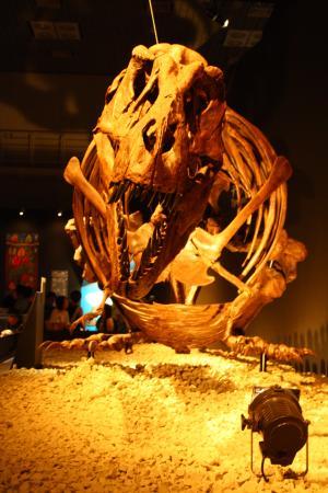 恐竜博 2011