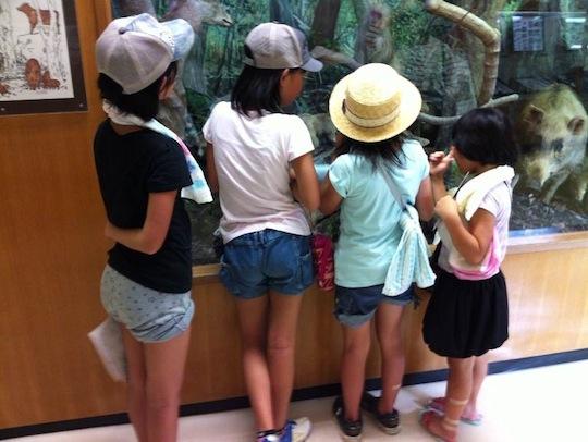 新城自然科学博物館