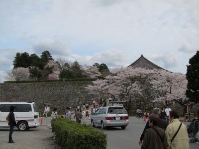 桜(篠山) (6)