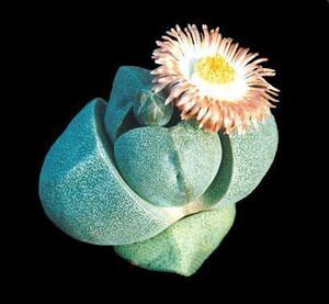 splitrocksucculent.jpg