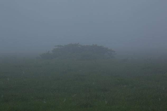八島ケ原湿原3
