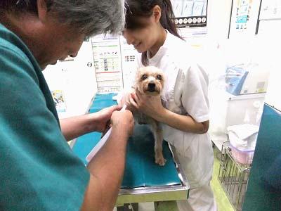 mimi1hospital