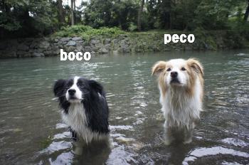 bocoちゃん&pecpちゃん