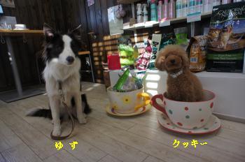 wan life看板犬