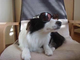 セレブ犬!?