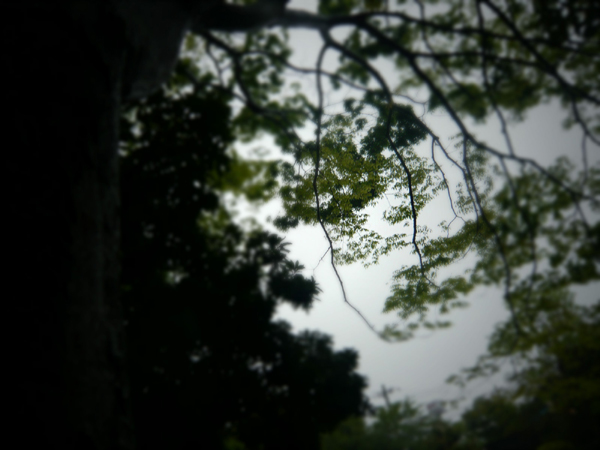 沖縄の空模様