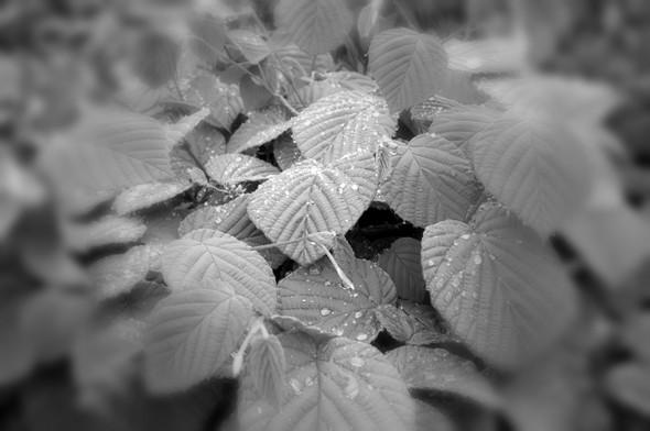 沖縄の葉っぱ