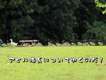 BLOG2011_0622_152115.jpg