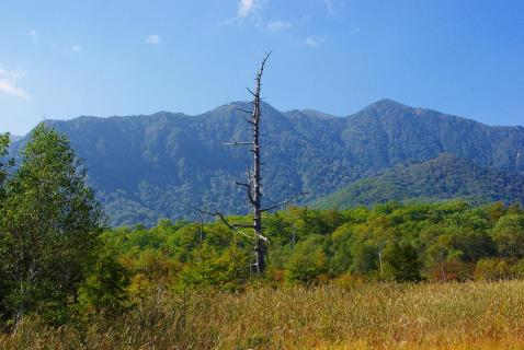 戦場ヶ原の枯れ木