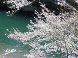 Cherry Blossom in Okumikawa