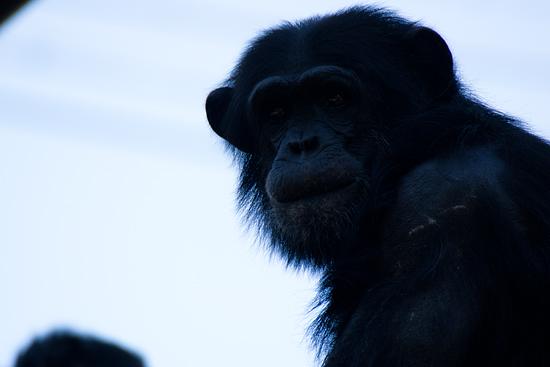 動物園-2