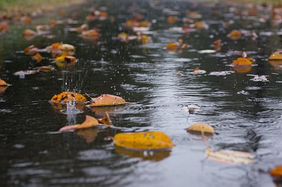 雨の森林公園-1