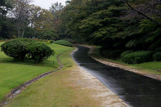 雨の森林公園-2