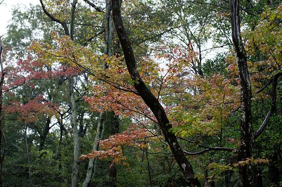 雨の森林公園-5