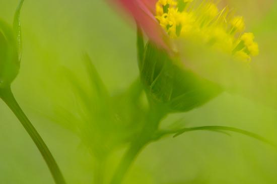 東山植物園便り-10