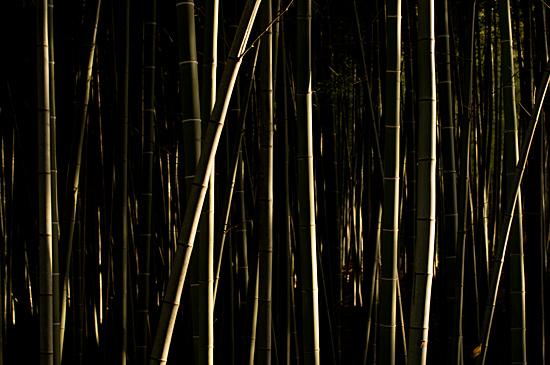 牧野ヶ池竹林-1