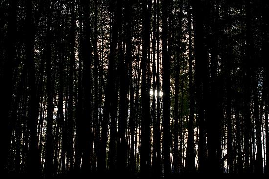 牧野ヶ池竹林-4