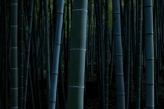 牧野ヶ池竹林-9