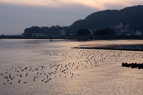 吉良の海4-5