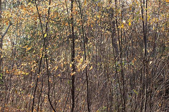 森林公園-5
