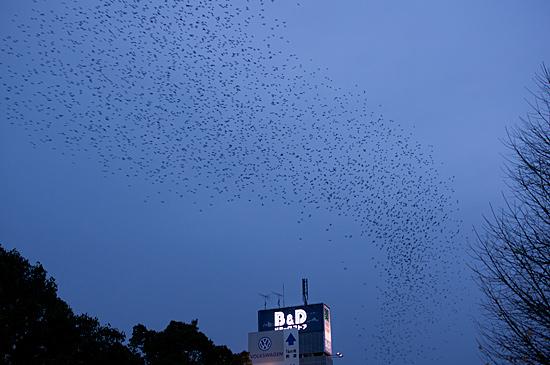 鳥の風景-11