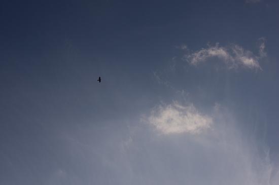 鳥の風景-12
