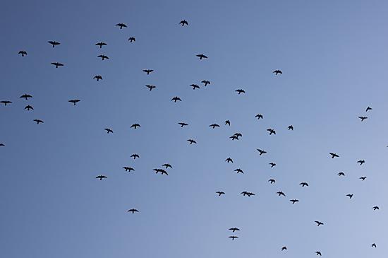 鳥の風景-3