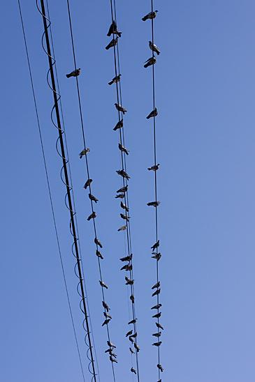 鳥の風景-4