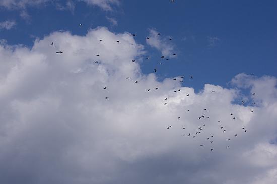 鳥の風景-7