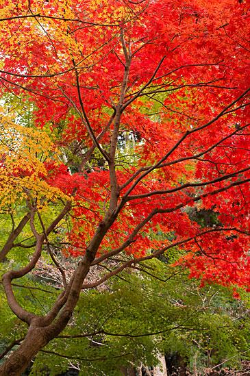 東山植物園1-8
