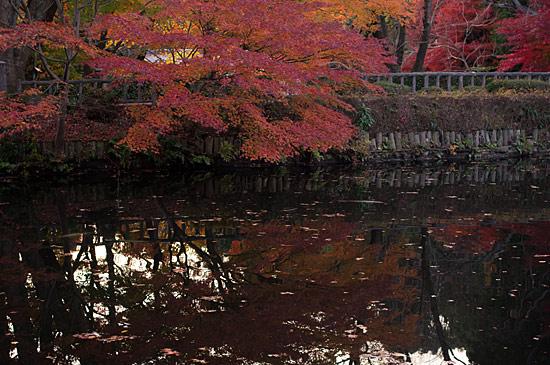 東山植物園2-4