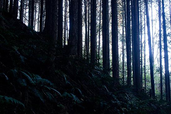 海上の森-6