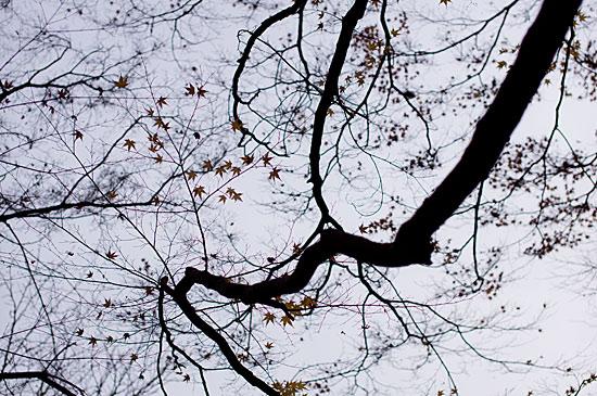 東山植物園便り-2