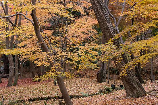 東山植物園便り-8