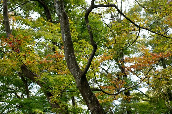 森林公園-10