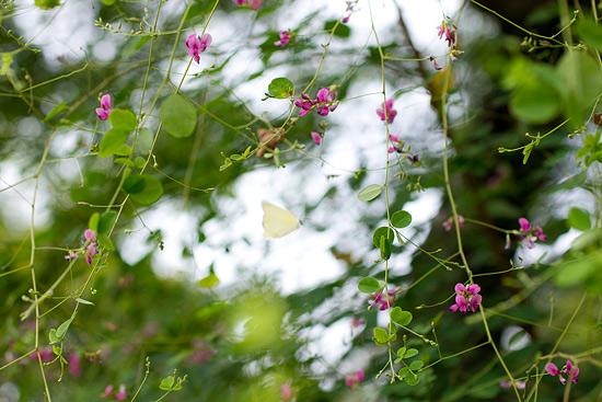 植物園-1