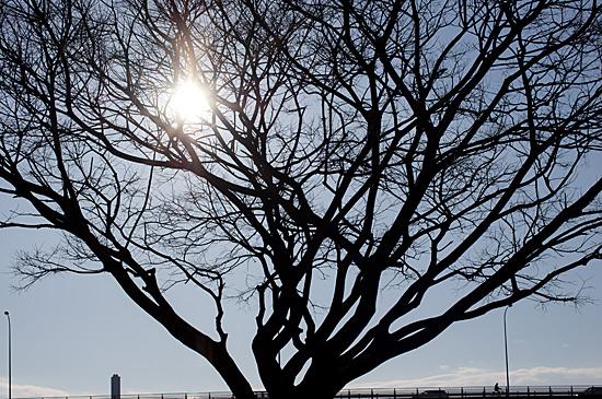 矢田川河川敷-4