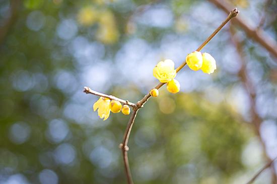 東山植物園1-7