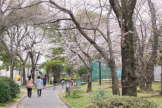桜シーズン-7