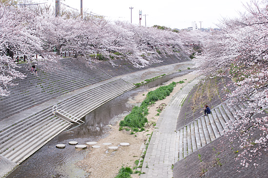 山崎川-11