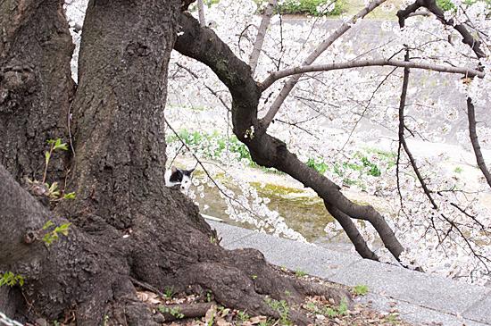 山崎川-12