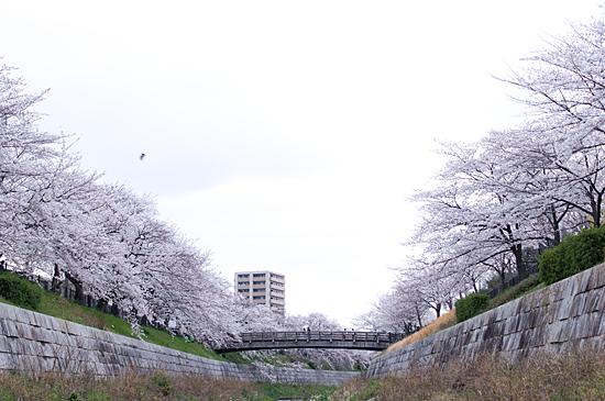 山崎川-13