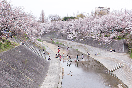 山崎川-2