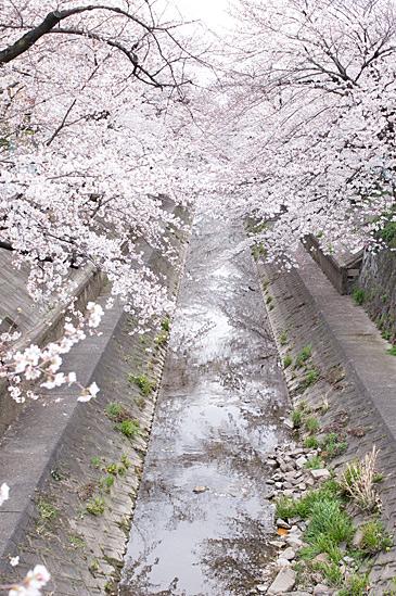 山崎川-3