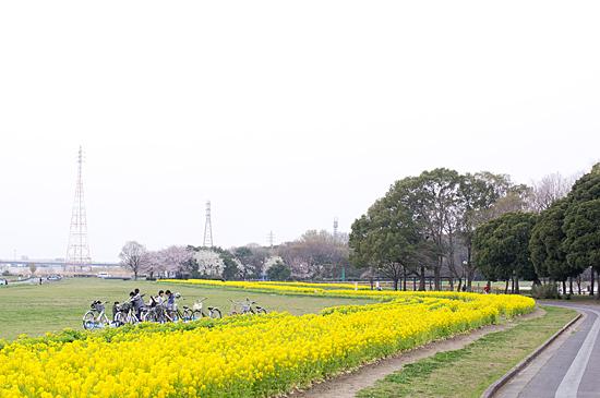 桜めぐり3-13